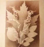 Tableau empreinte feuilles