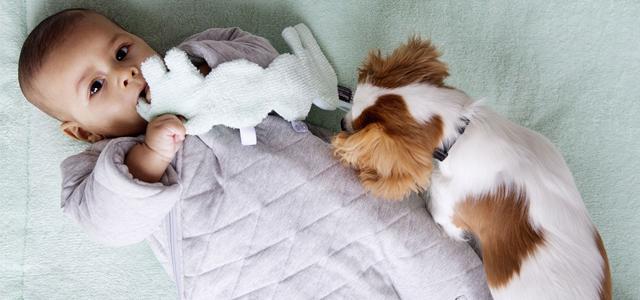 Bébé et les animaux de compagnie